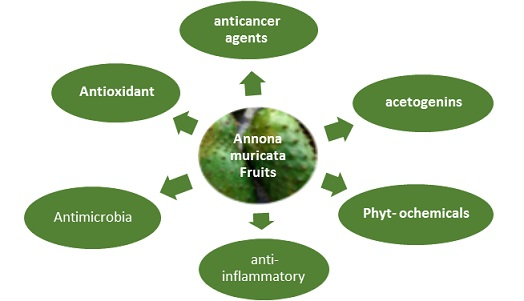 Review of Phytochemical and Medical Applications of Annona Muricata Fruits
