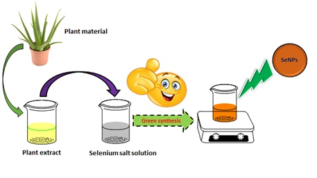 Plant Extract Assisted Eco-benevolent Synthesis of Selenium Nanoparticles- A Review on Plant Parts Involved, Characterization and Their Recent Applications